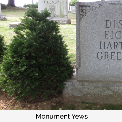 Monument Yews
